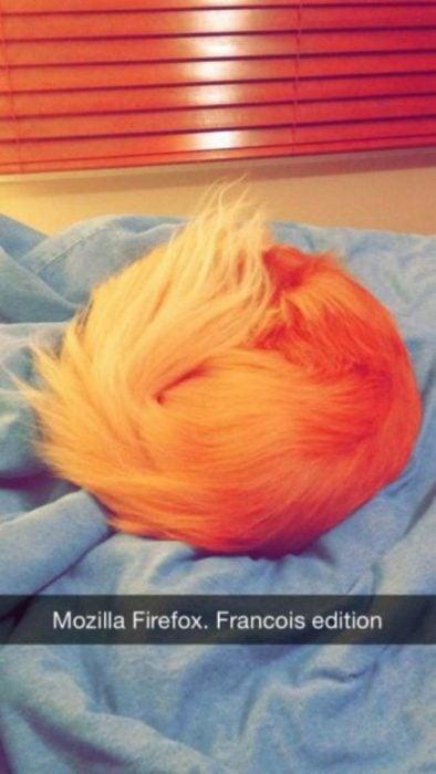 animal naranja hecho