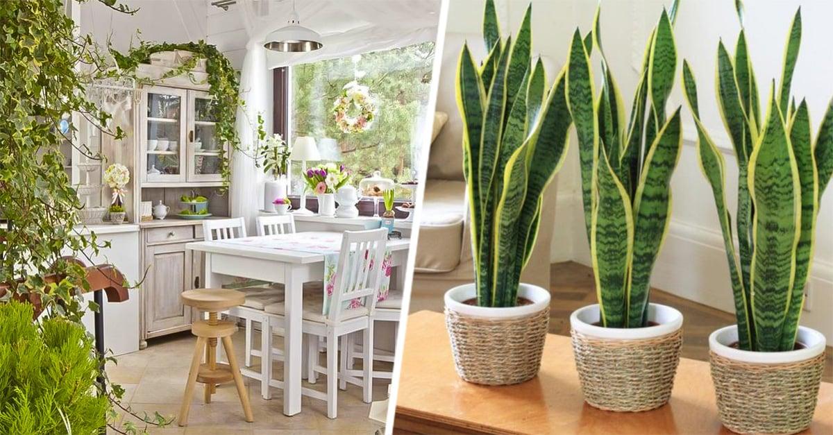 plantas que mantendrán limpio el ambiente de tu casa y oficina