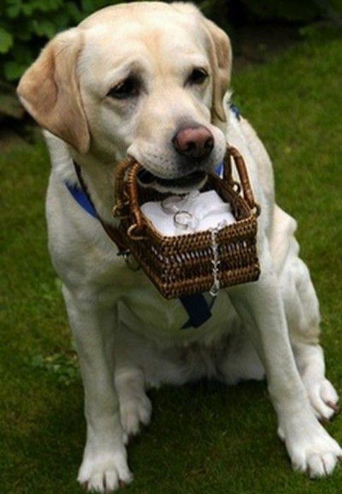 perro con canasta y anillo de bodas