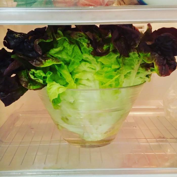 manojo de lechuca en frasco con agua en el refrigerador