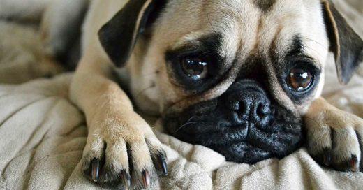 Estos son 10 tips que ayudarán a tu perro cuando salgas de casa