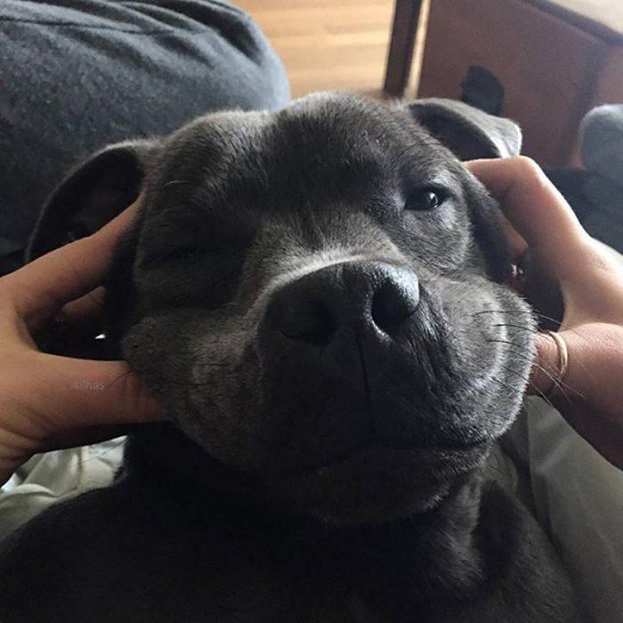 perro negro sonriendo con manos de mujer