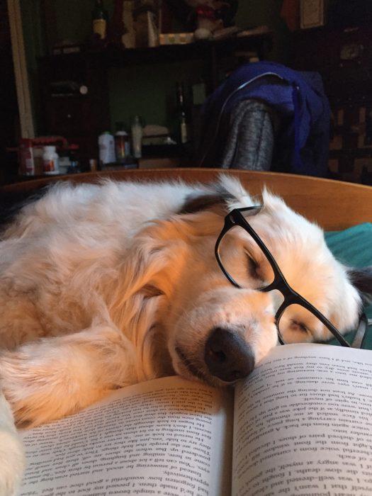 perro con lentes acostado al lado de un libro