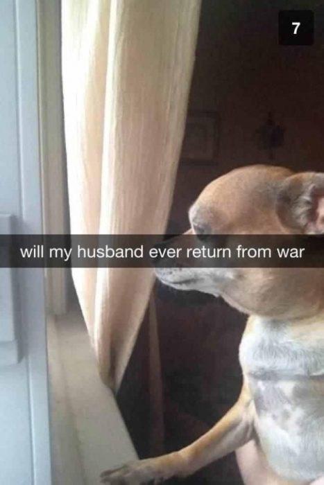 snap perro mirando por la ventana