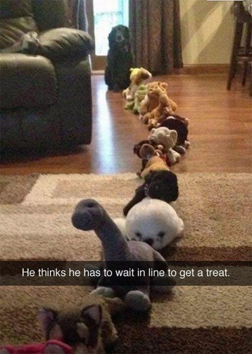 snap perro hace fila detrás de peluches
