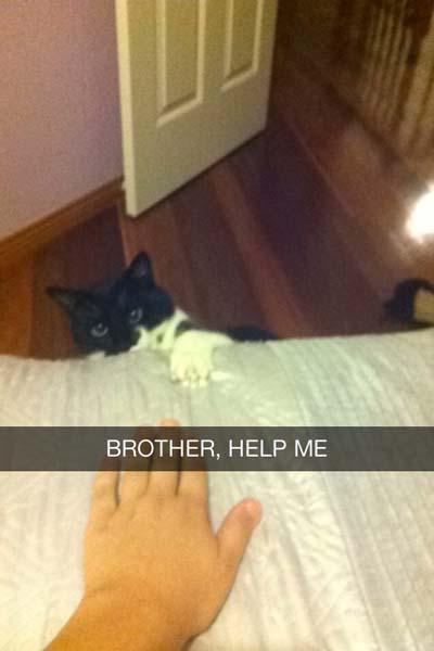 snap con gato tratando de subir a una cama