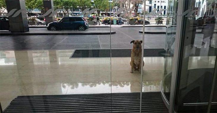 pero callejero Rubio frente a un hotel