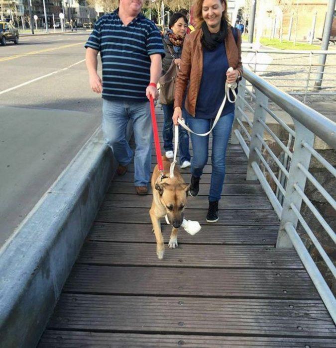 perro callejero con chica caminando por un puente