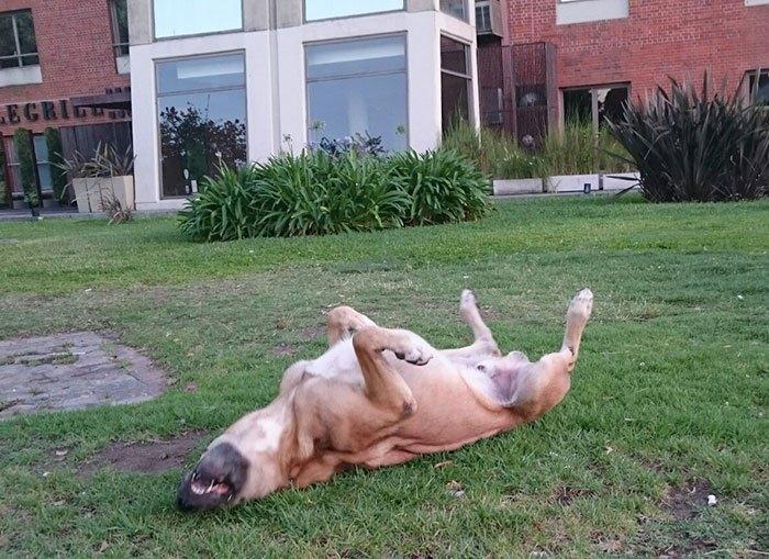 perro callejero Rubio en su hogar