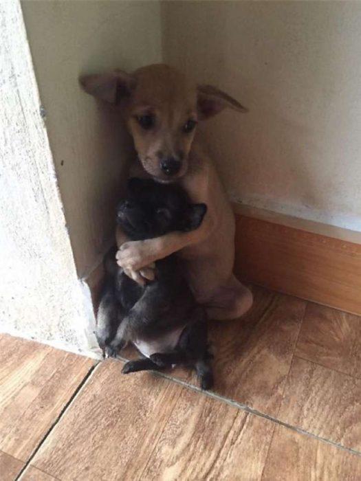 perritos rescatados en Vietnam