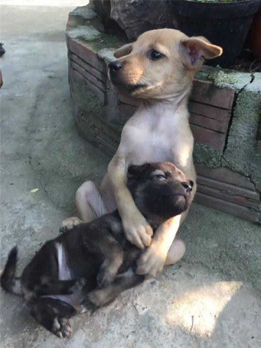 cachorros abrazados