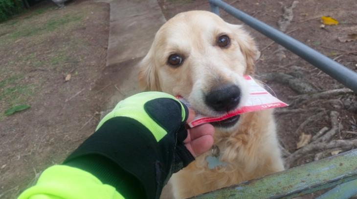 Cartero entregándole el correo a un perro