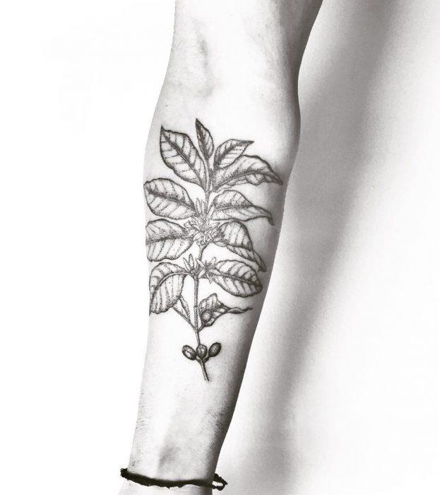 Tatuaje planta de café