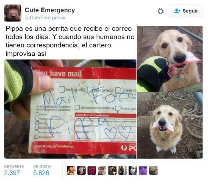 captura de pantalla de twitter perro con carta