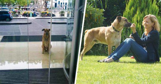 Aeromoza adopta a un perro que la esperó seis meses afuera de su hotel