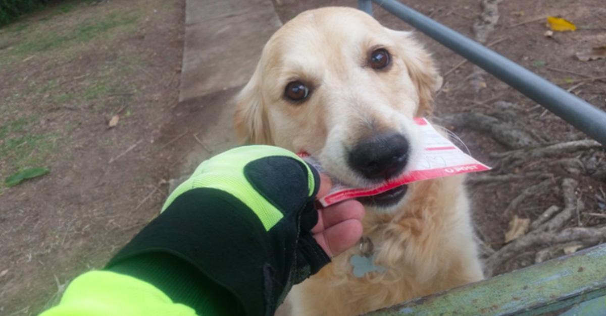 Esta adorable perrita adora recibir el correo de su amo; ¡El cartero improvisa para verla feliz!