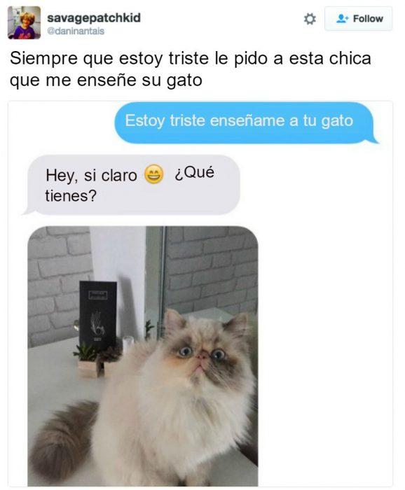 captura de pantalla de twitter gato