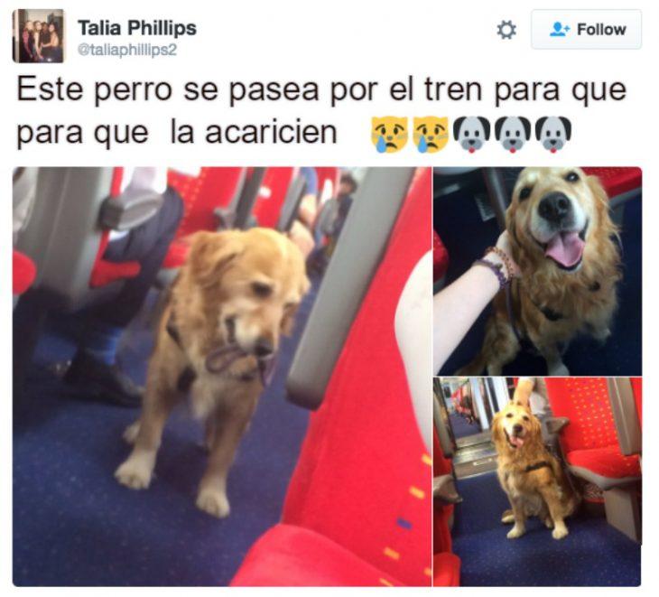 captura de pantalla de twitter perro en autobus