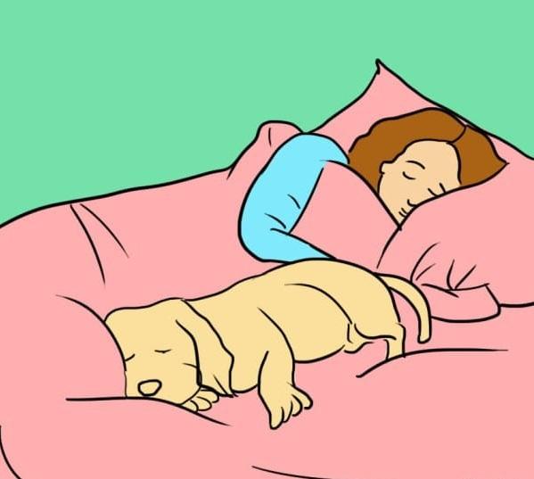 perro dormido a un lado de mujer