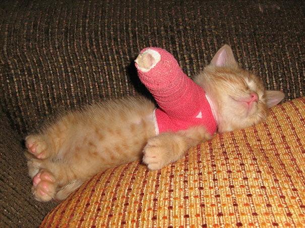 Gatito con un brazo quebrado y enyesado recostado en al cama