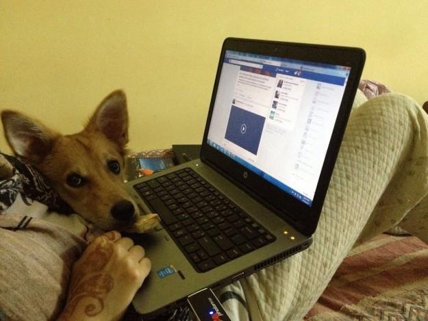 Joven hindú trabajando en computadora con su perro