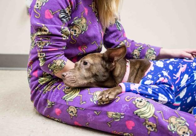 Perro recostado en los pies de su dueña, ambos usando una pijama