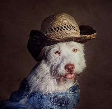 Perro vestido con un overoll y un sombrero de granjero