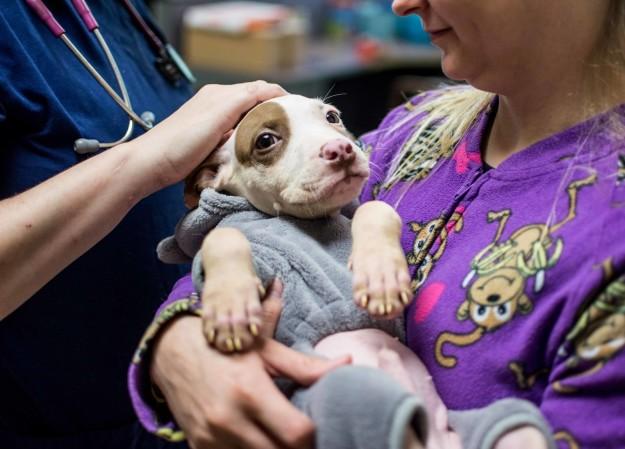 Cachorro en pijama siendo sostenido por una chica