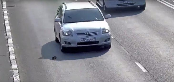 Auto a punto de atropellar a un gato