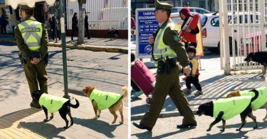 Policía adopta perritos callejeros para protegerlos e integrarlos al cuerpo de vigilancia