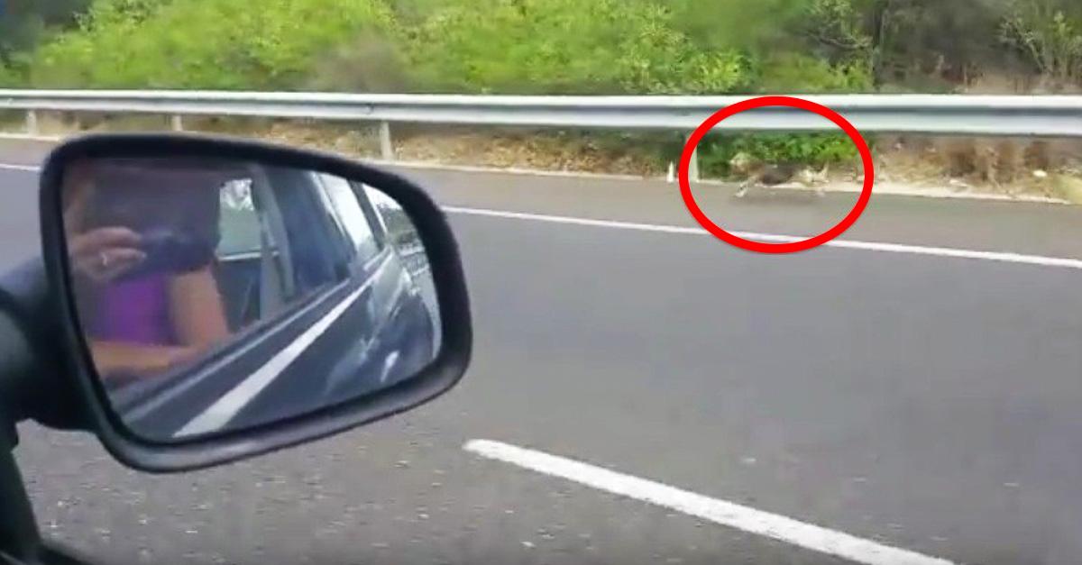 Después de que sus dueños lo abandonaran, este perro siguió su coche durante kilómetros por la carretera