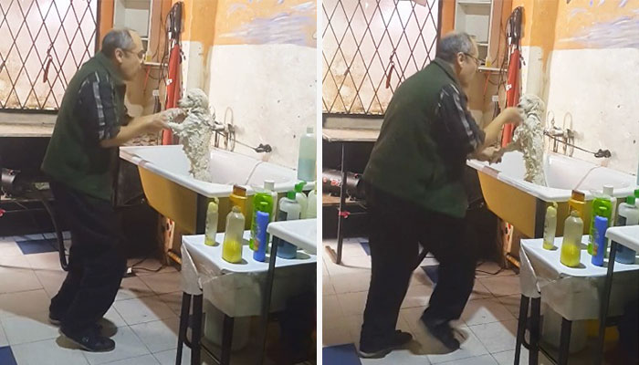 dog-groomer-dancing-3