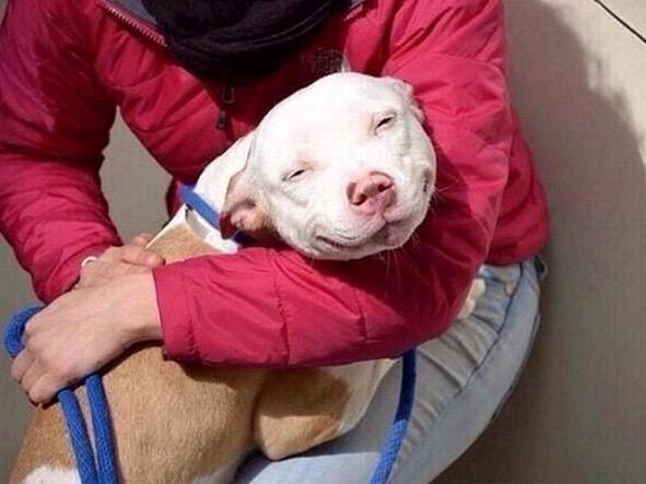 Dog smiling.