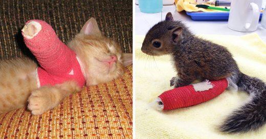 Estas mascotas con una patita rota es lo más tierno que verás hoy