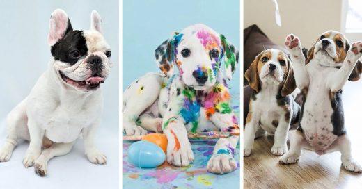Tu signo zodiacal también determina cuál es la raza de perro que mejor encaja con tu personalidad
