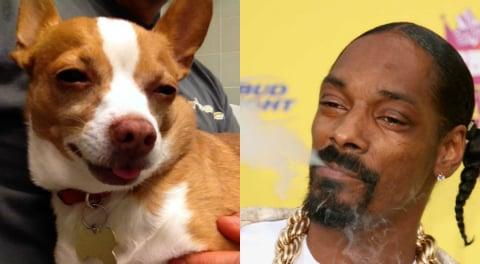 Fotografía del perro y de snoop dog.
