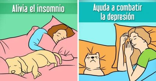7 razones por las cuales deberías compartir tu cama con tu perro