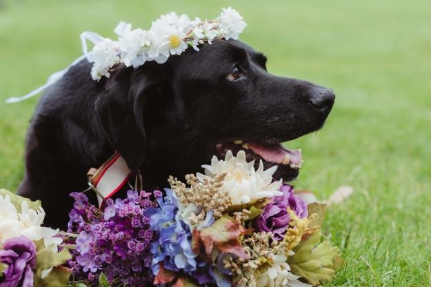 Fotos del perrito durante la boda.