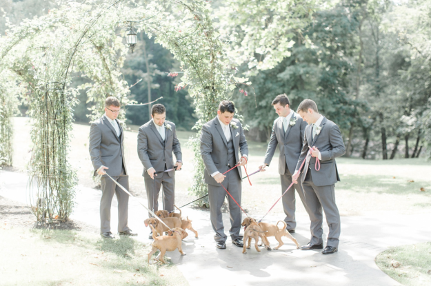 Accompanying groom spending time with the puppies.