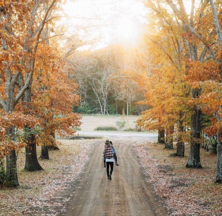 camino de hojas en otoño y arboles