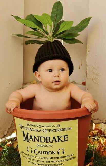 bebé disfrazado de mandrágora