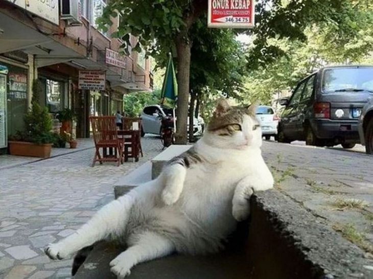 Tombili, gato relajado