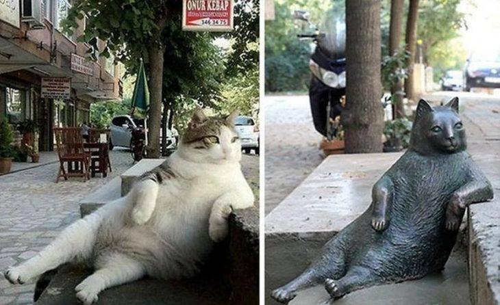 Gato relajado y su estatua
