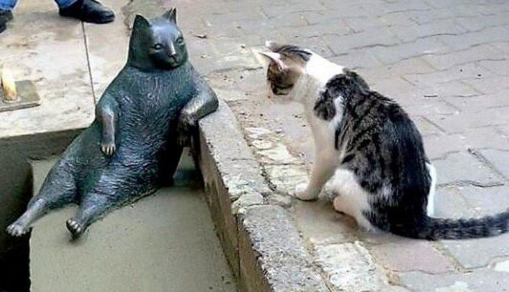 Gato observando una estatua