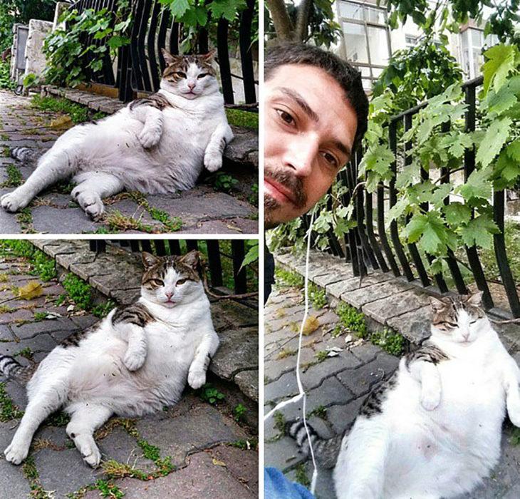 Tombili, el gato relajado