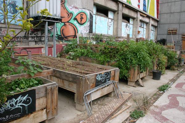 Par s aprueba el cultivo en cualquier lugar de la ciudad for Huerto en azotea