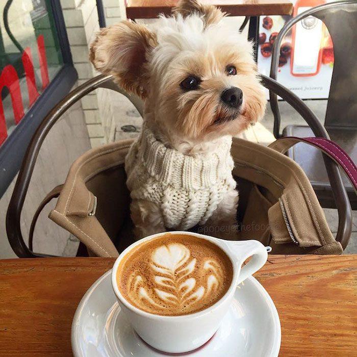 Popeye tomando café