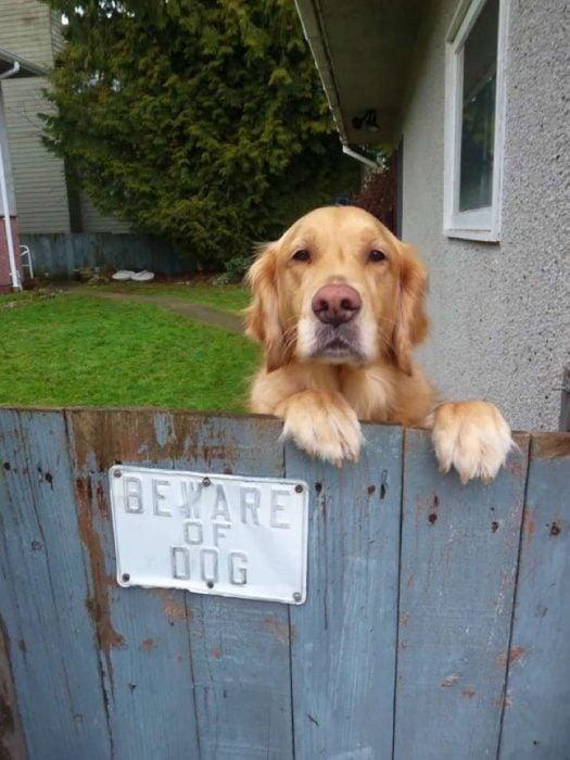 Perro protegiendo su guarida.