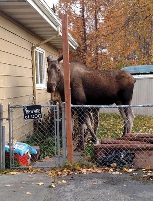 Animal detrás de una reja.