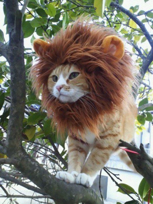 boredpanda-com-halloween-cat-costumes-18-57f75fdd69a76__605